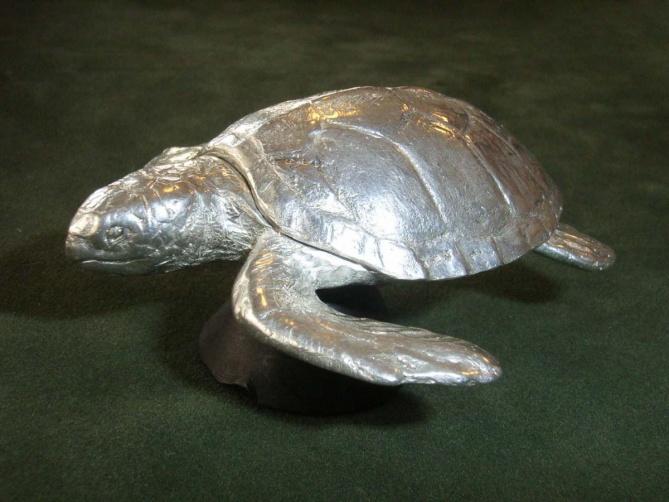 Stříbrná želva - 1. foto